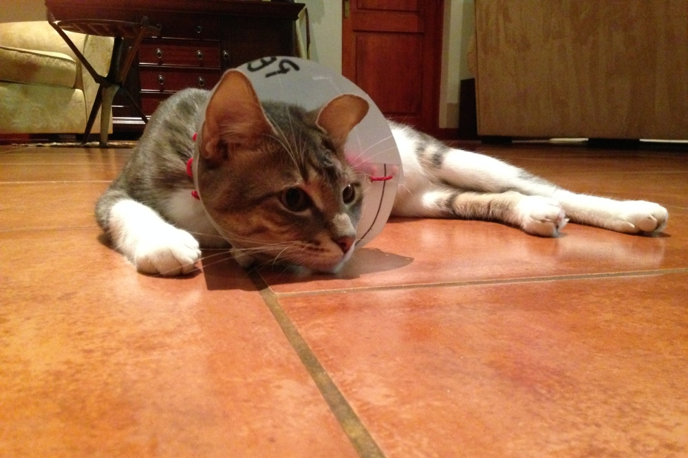 (January) Homemade veterinary care for our Congolese kitty, Zawadi (and why we left our spoiled American one at home)