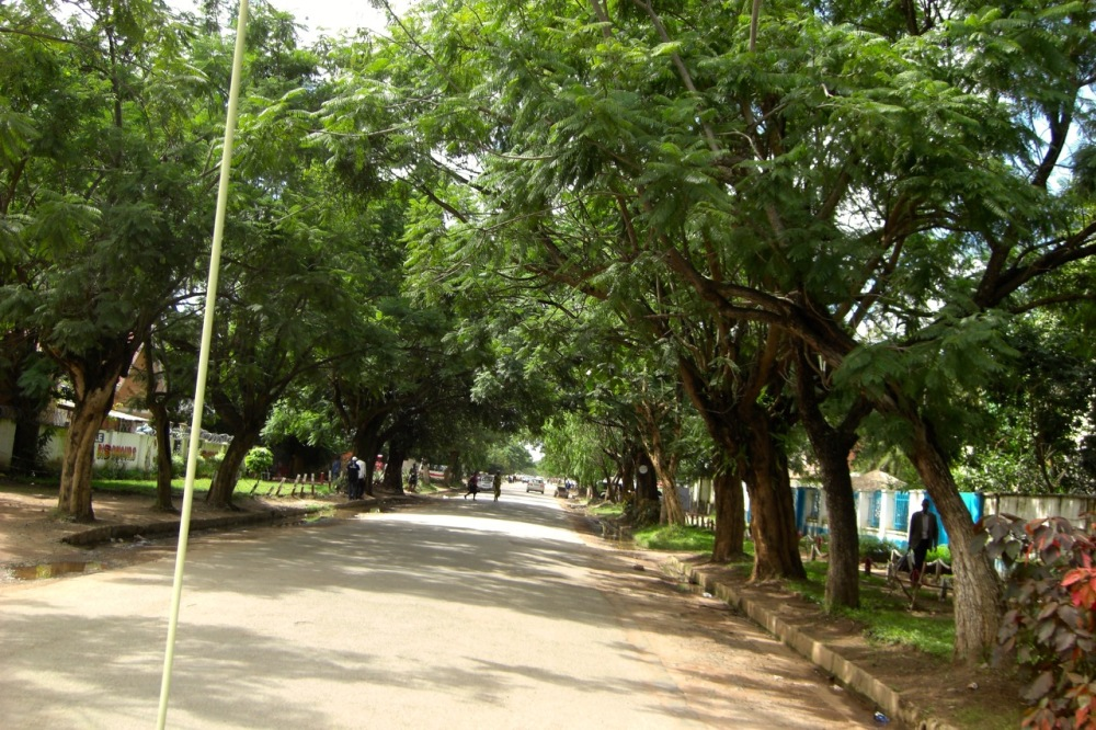 A typical jacaranda-lined residential street near the city center.