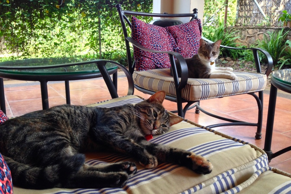 (Apr 2015) Cat-sitting for a friend; Zawadi looking on jealously.