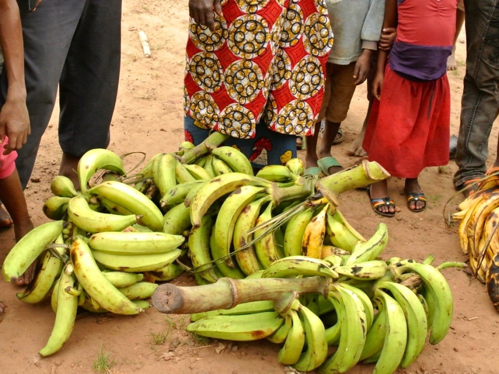 One of many plantain purchases