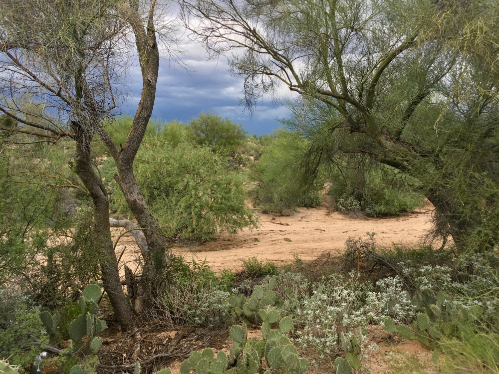 The desert in September, after a heavy monsoon season.